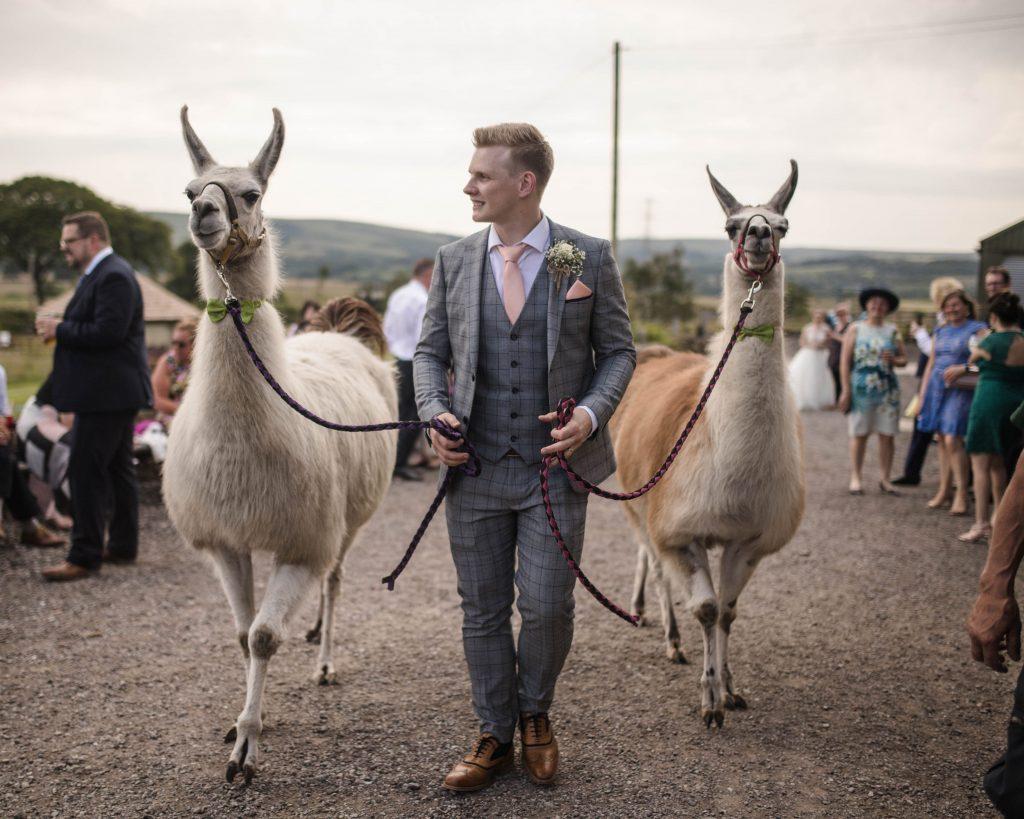 The groom holding both llamas, documentary wedding photography.